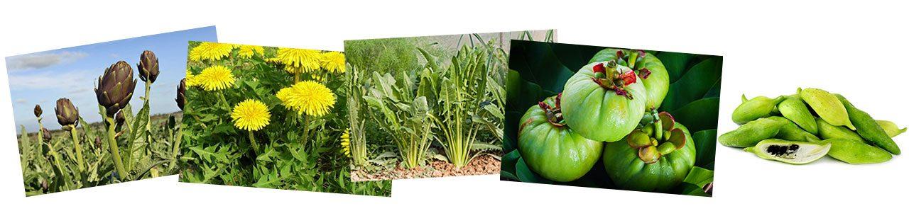 piante anti colesterolo